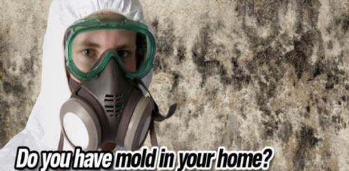 Do you have mold